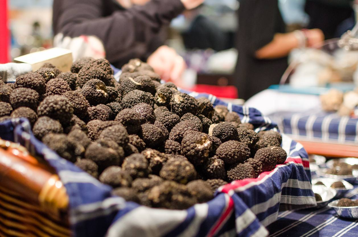 différentes variétés de truffes